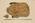 Lasiorhinus Krefftii gillespiei